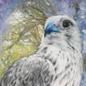 Белый кречет, художник Маргарита Щенина