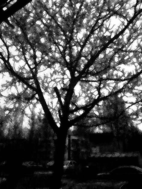 Чёрные ветви