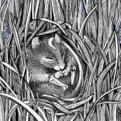 Мышиный гиацинт (1), художник Евгенияя Соколикова