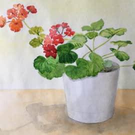 Красный цветок, белый горшок