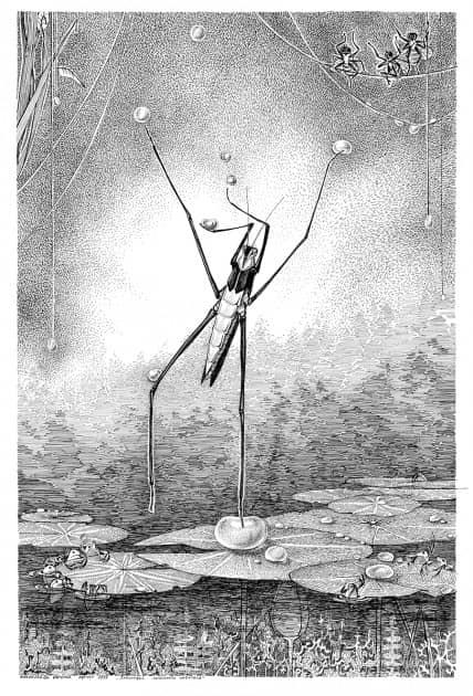 Водомерка (из серии зарисовка энтомолога любителя)