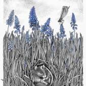 Мышиный гиацинт, художник Евгенияя Соколикова