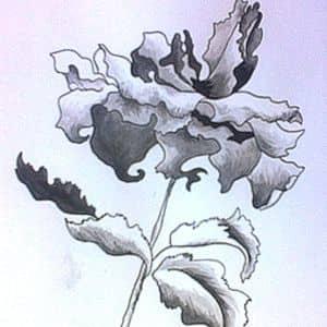 Мастер-класс по рисованию тушью и пером
