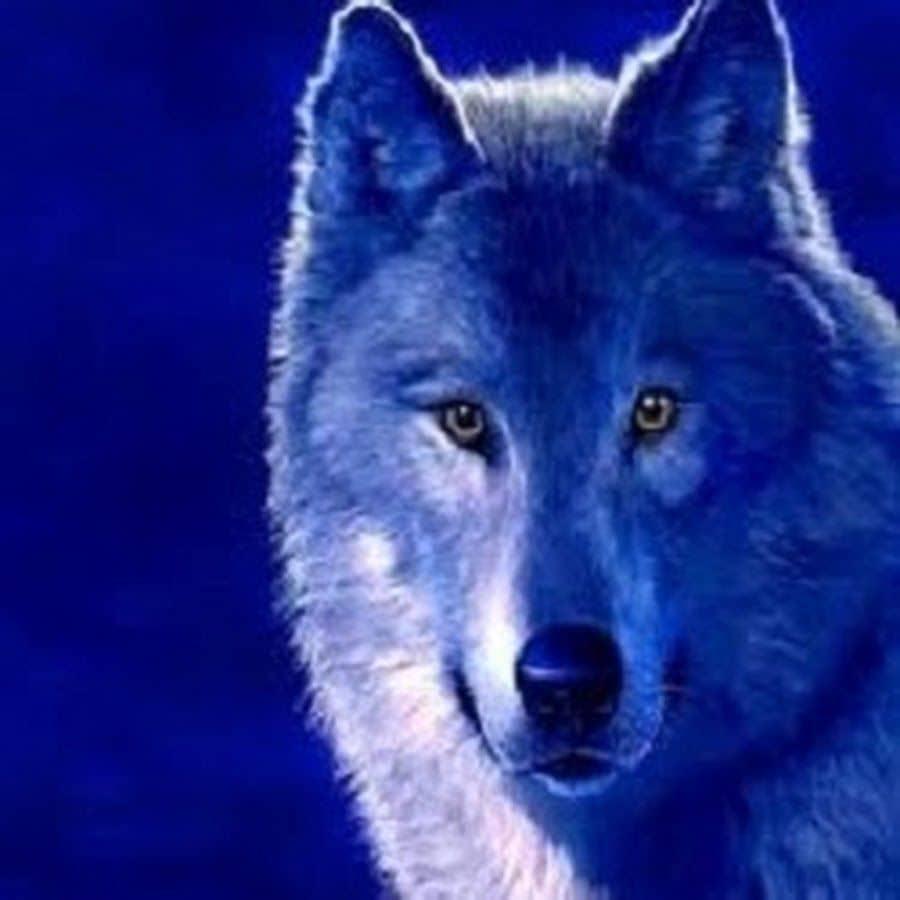 Рисуем животных: анатомия волка