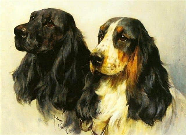 Советы новичкам: рисуем собак