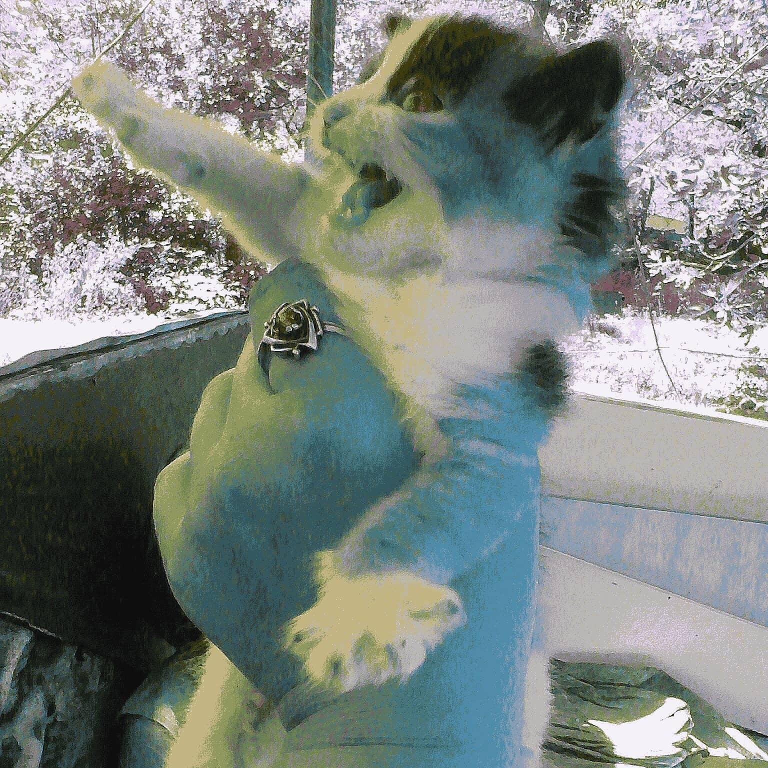 Премия котик