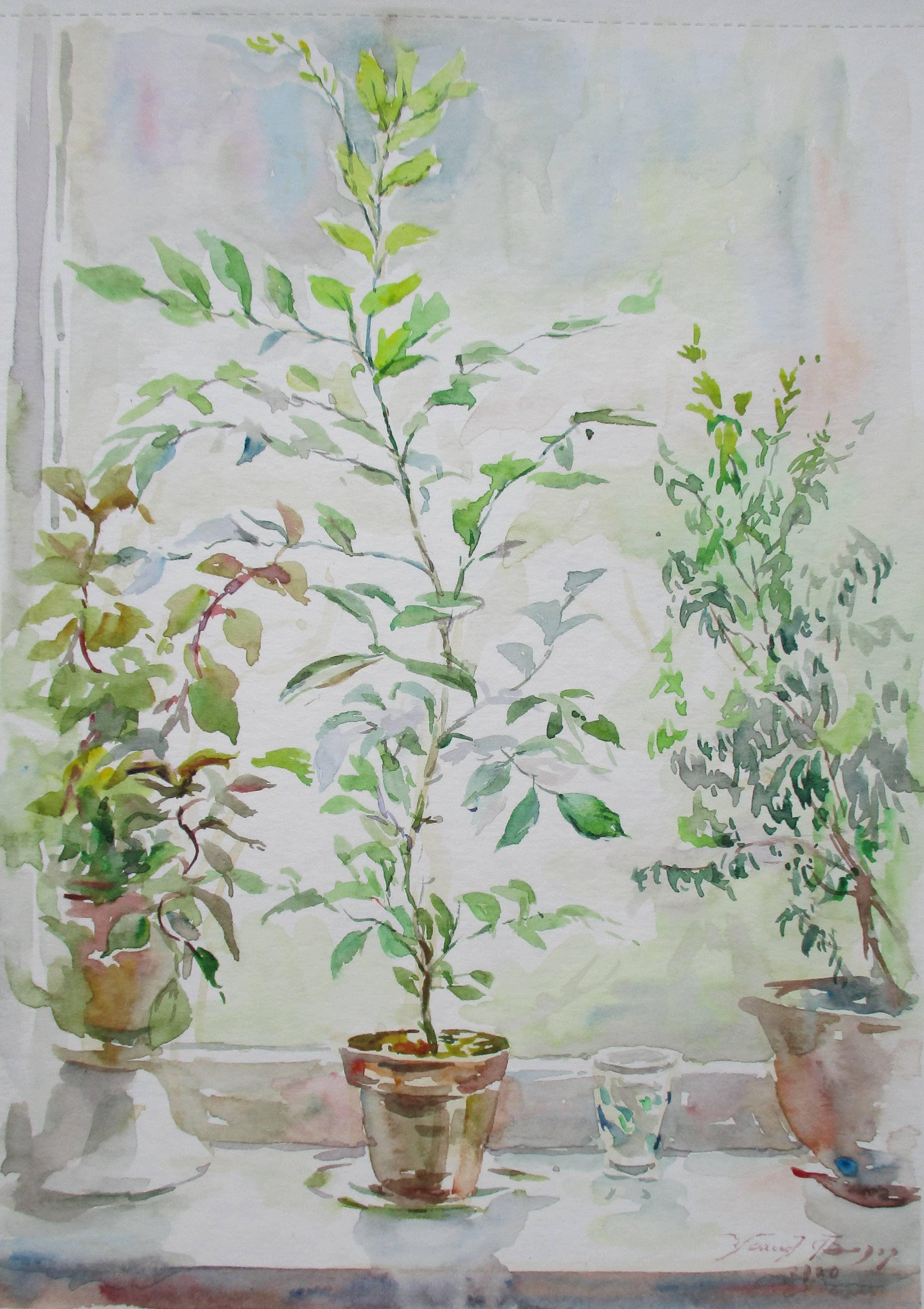 Душа комнатных растений.