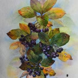 Веточка черноплодки