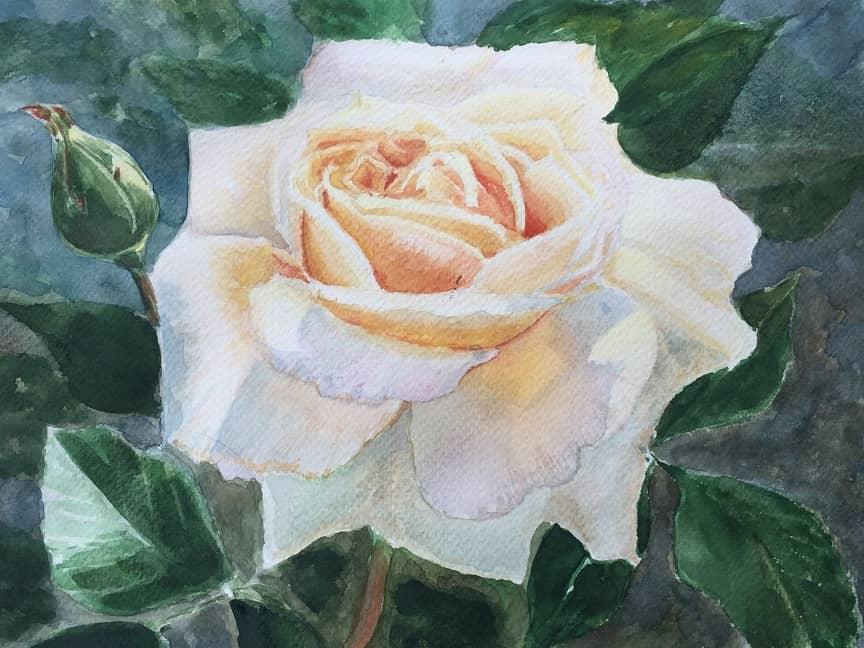 Роза Gold из сада