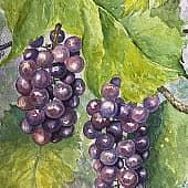 Виноград из сада, художник Наталия Фарстова