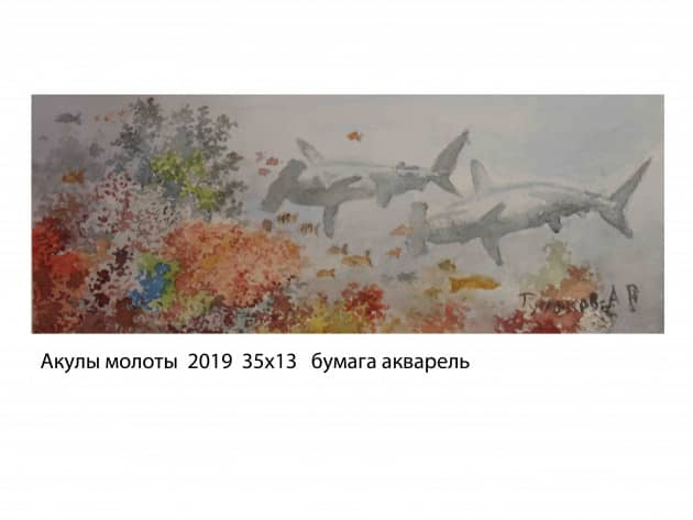 Акулы молоты 2019