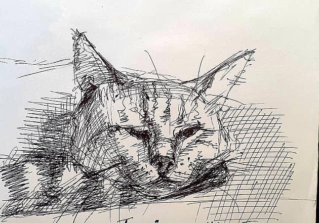 Котик Сувенир