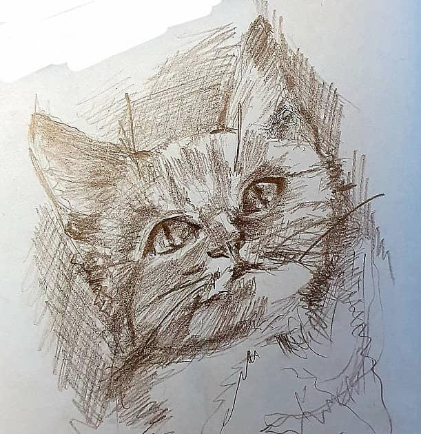 Рисунок котёнка