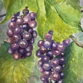 Виноград из сада (1), художник Наталия Фарстова