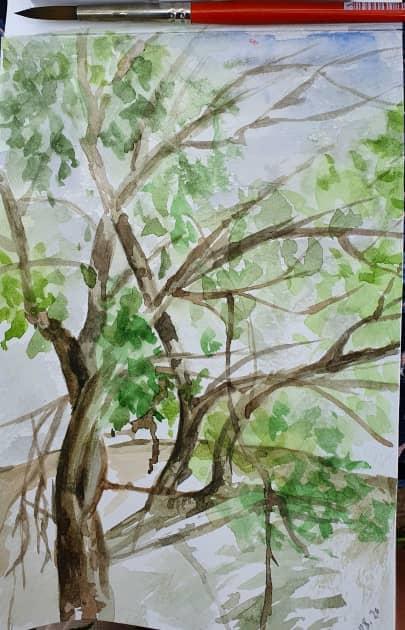 южное дерево над водой