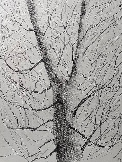 Вилка дерева