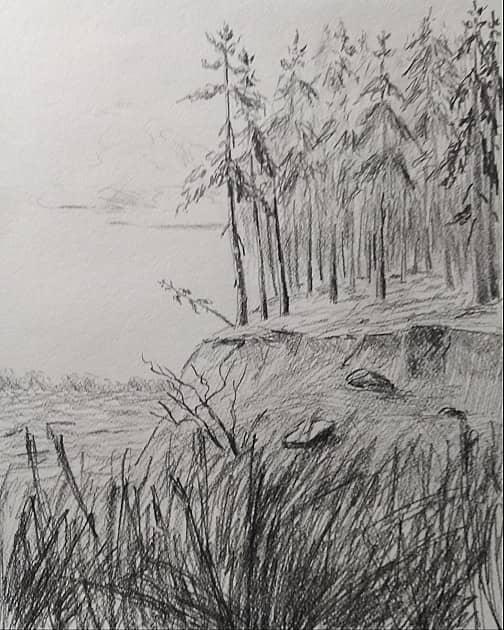 Пейзаж с соснами ( зарисовки )