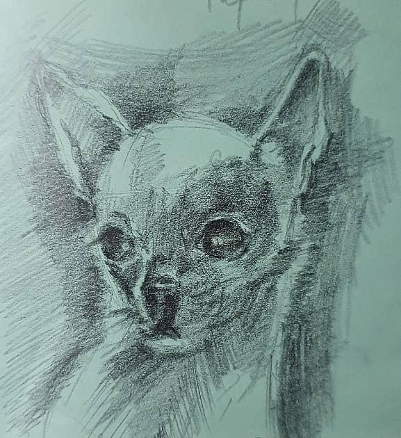 Рисунок маленькой собачки