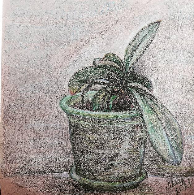 """Орхидея """"отдыхающая"""""""