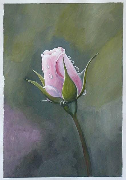 Роза в росе.